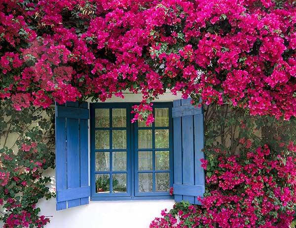 unnamed file 5 - Tả cây hoa bằng lăng mà em nhìn thấy