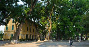 bieu cam ve mai truong than yeu 310x165 - Cảm nhận của em về bài thơ Đây thôn vĩ dạ của Hàn Mạc Tử